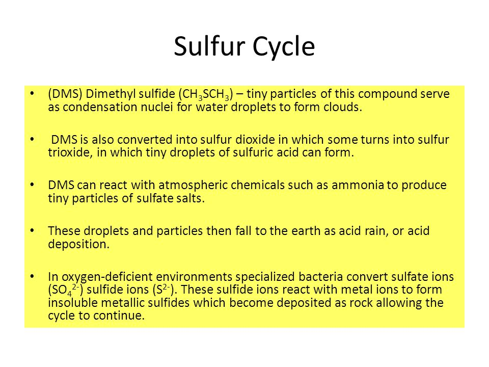 Sulfur Cycle (DMS) Dimethyl sulfide (CH 3 SCH 3 ) – tiny particles of this compound serve as condensation nuclei for water droplets to form clouds.