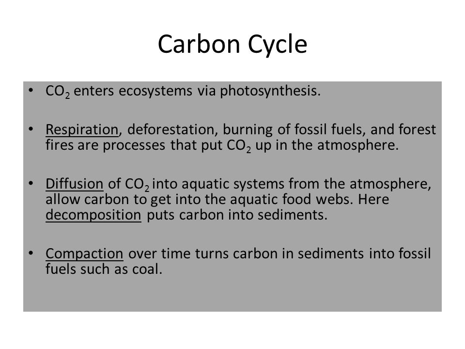 Carbon Cycle CO 2 enters ecosystems via photosynthesis. Respiration, deforestation, burning of fossil fuels, and forest fires are processes that put C