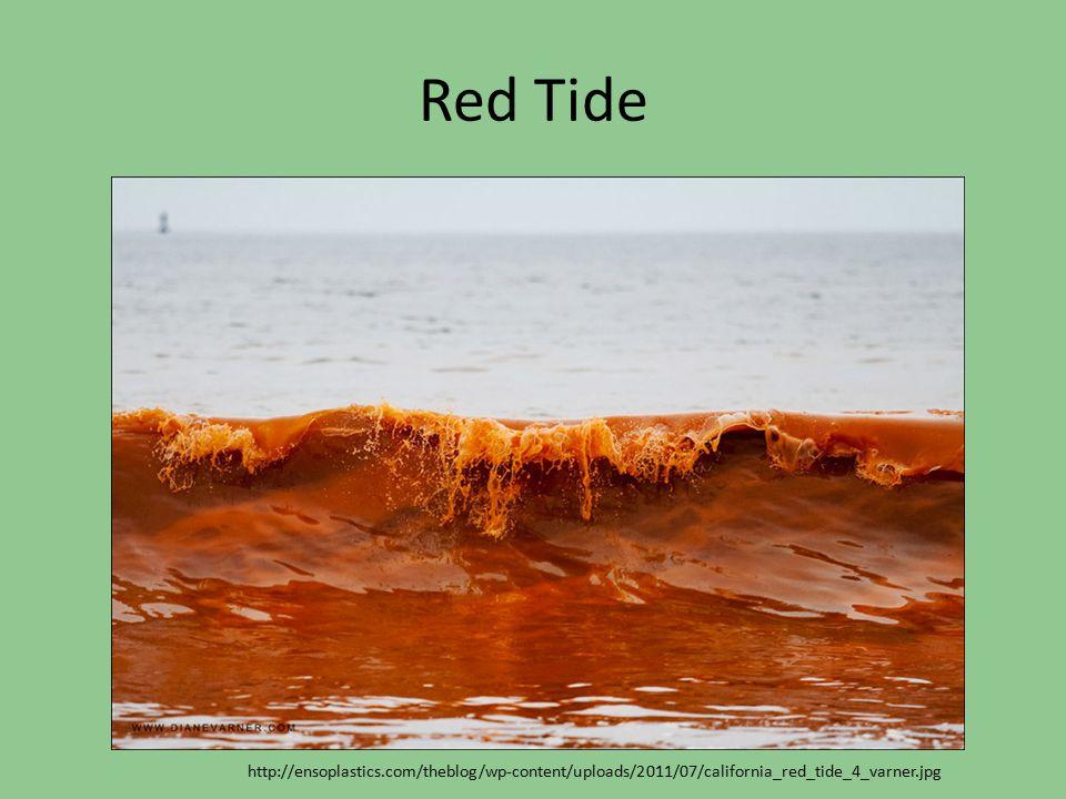 Red Tide http://ensoplastics.com/theblog/wp-content/uploads/2011/07/california_red_tide_4_varner.jpg