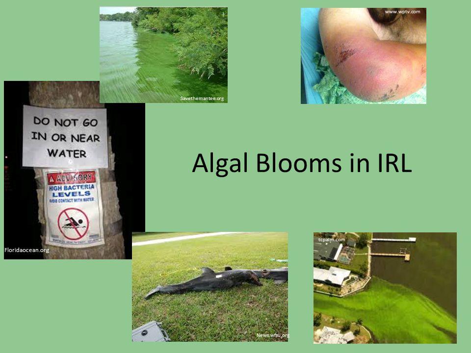 Algal Blooms in IRL Floridaocean.org Savethemantee.org tcpalm.com News.wfsu.org www.wptv.com