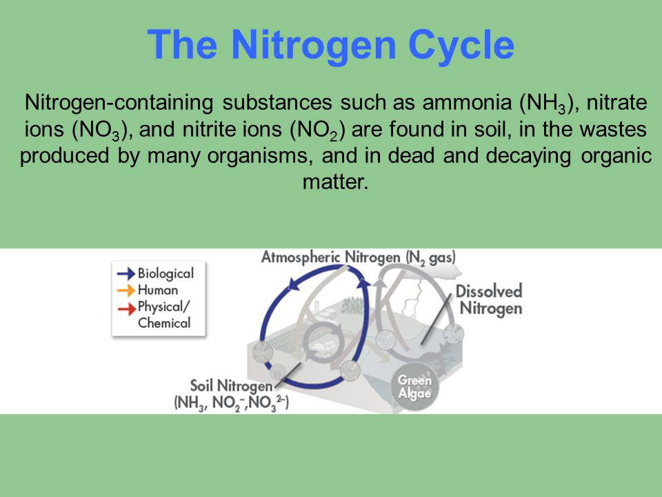 The Nitrogen Cycle Nitrogen-containing substances such as ammonia (NH 3 ), nitrate ions (NO 3 ), and nitrite ions (NO 2 ) are found in soil, in the wa