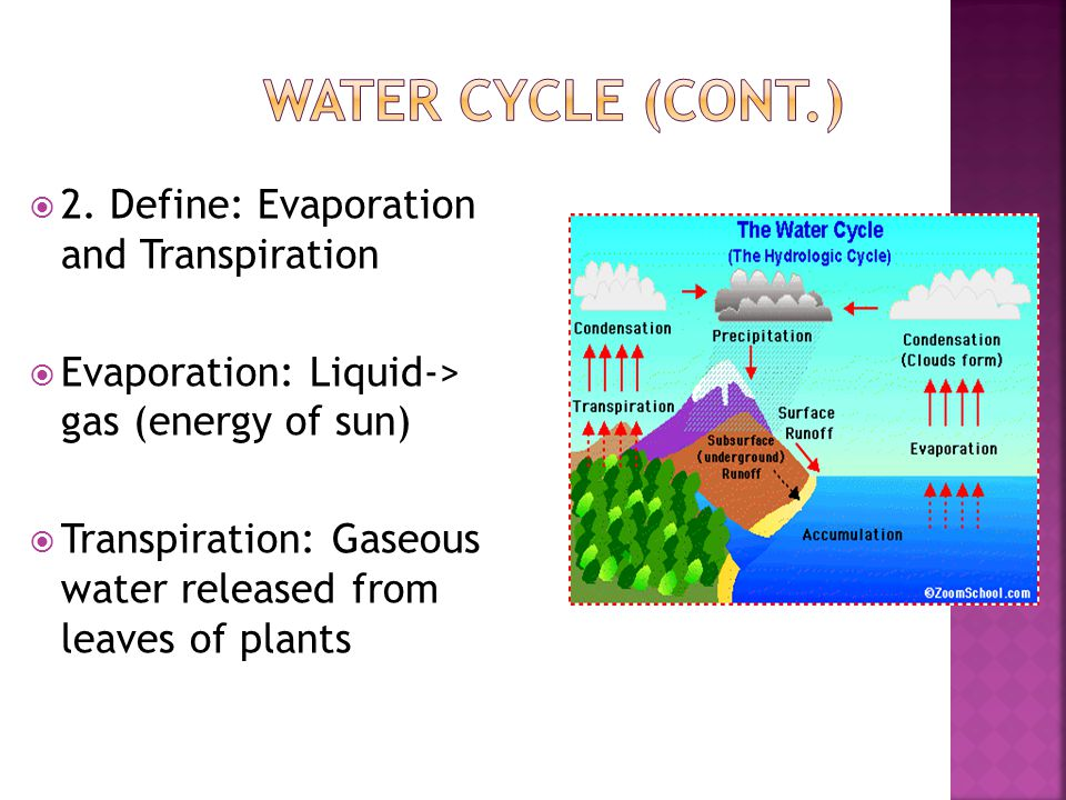  2. Define: Evaporation and Transpiration  Evaporation: Liquid-> gas (energy of sun)  Transpiration: Gaseous water released from leaves of plants