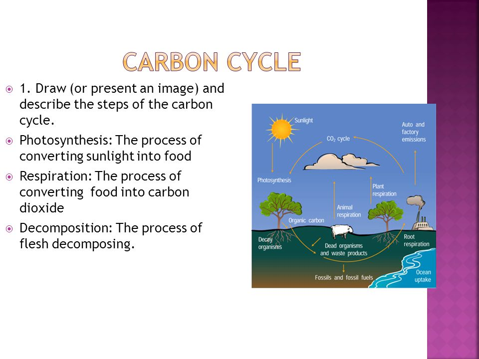  1.Draw (or present an image) and describe the steps of the carbon cycle.