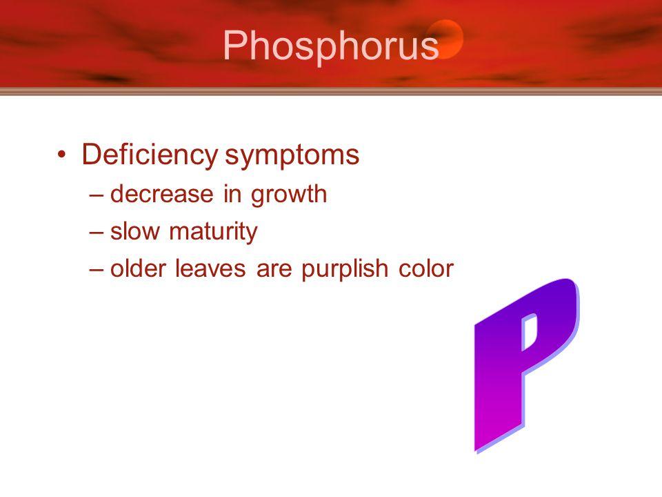 Phosphorus Deficiency symptoms –decrease in growth –slow maturity –older leaves are purplish color