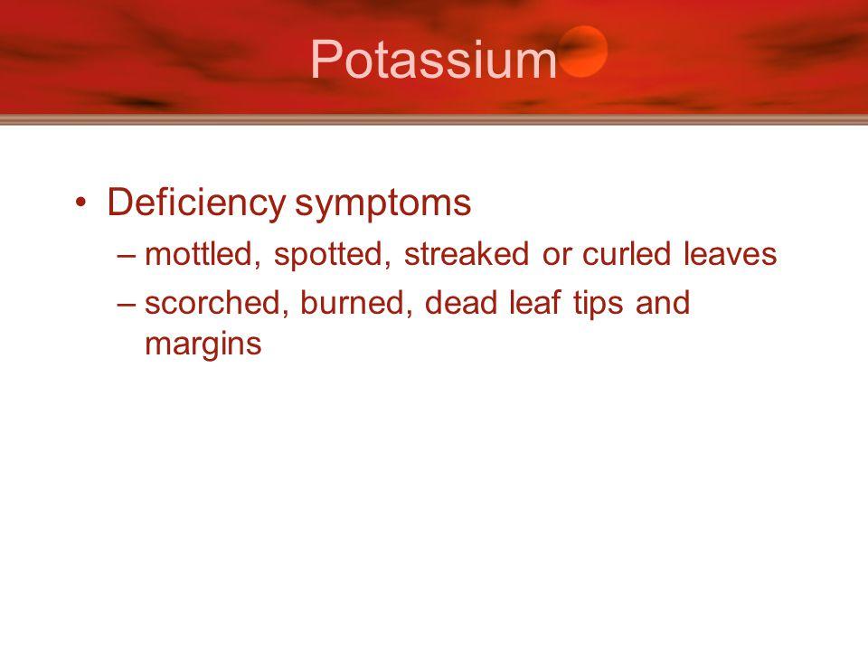 Potassium Deficiency symptoms –mottled, spotted, streaked or curled leaves –scorched, burned, dead leaf tips and margins