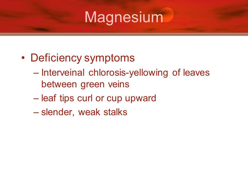 Magnesium Deficiency symptoms –Interveinal chlorosis-yellowing of leaves between green veins –leaf tips curl or cup upward –slender, weak stalks