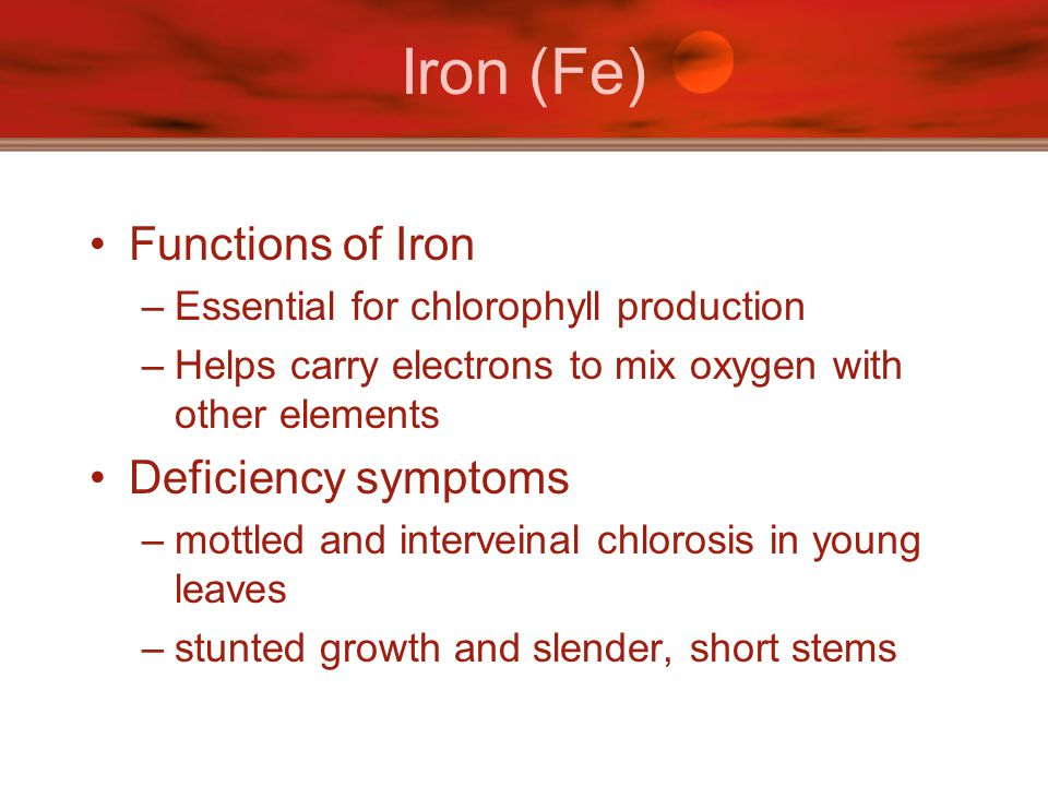Iron (Fe) Functions of Iron –Essential for chlorophyll production –Helps carry electrons to mix oxygen with other elements Deficiency symptoms –mottle