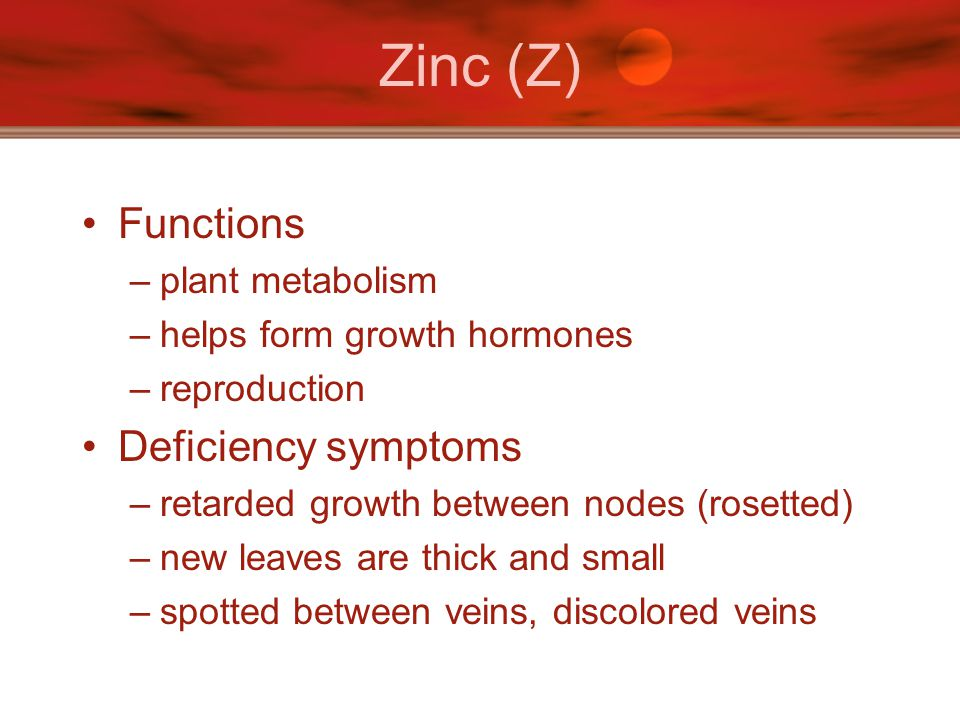Zinc (Z) Functions –plant metabolism –helps form growth hormones –reproduction Deficiency symptoms –retarded growth between nodes (rosetted) –new leav