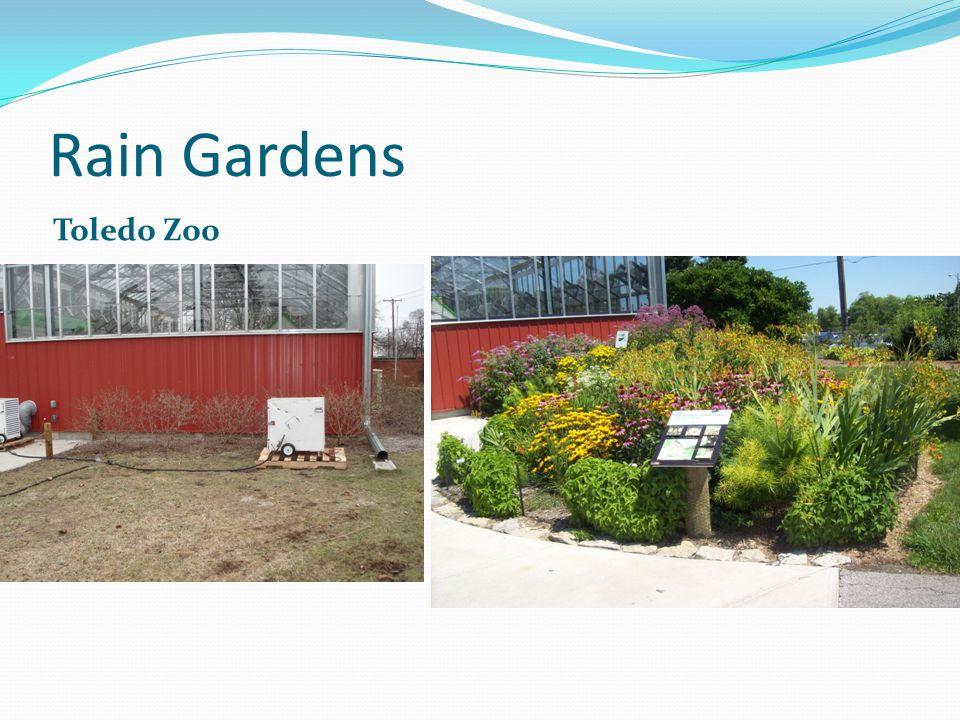 Rain Gardens Toledo Zoo