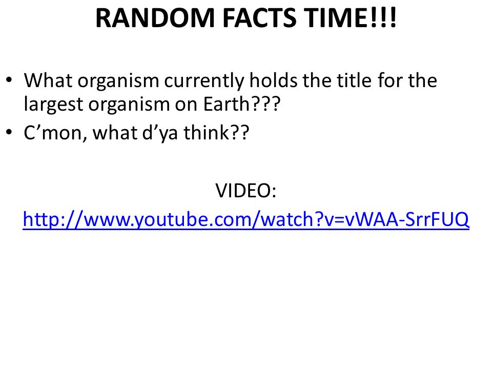 RANDOM FACTS TIME!!. What organism currently holds the title for the largest organism on Earth??.