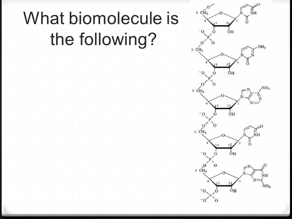 What biomolecule is the following