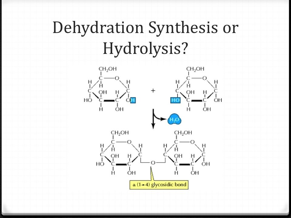 Dehydration Synthesis or Hydrolysis