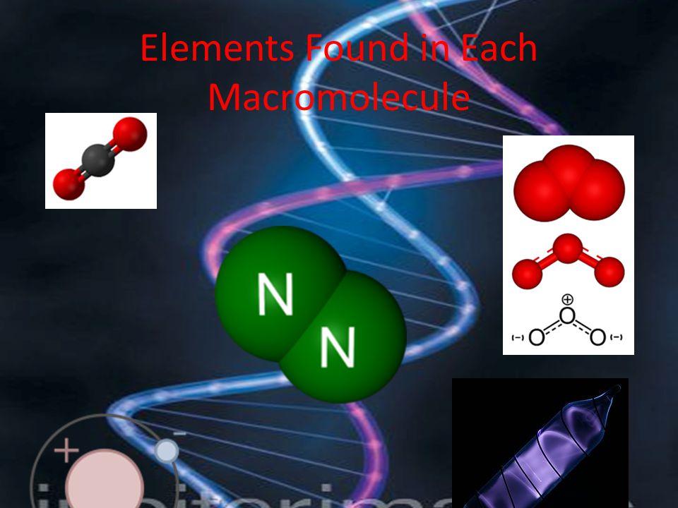 Elements Found in Each Macromolecule