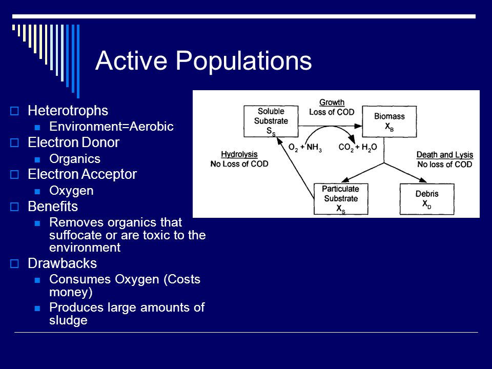 Active Populations  Heterotrophs Environment=Aerobic  Electron Donor Organics  Electron Acceptor Oxygen  Benefits Removes organics that suffocate or are toxic to the environment  Drawbacks Consumes Oxygen (Costs money) Produces large amounts of sludge