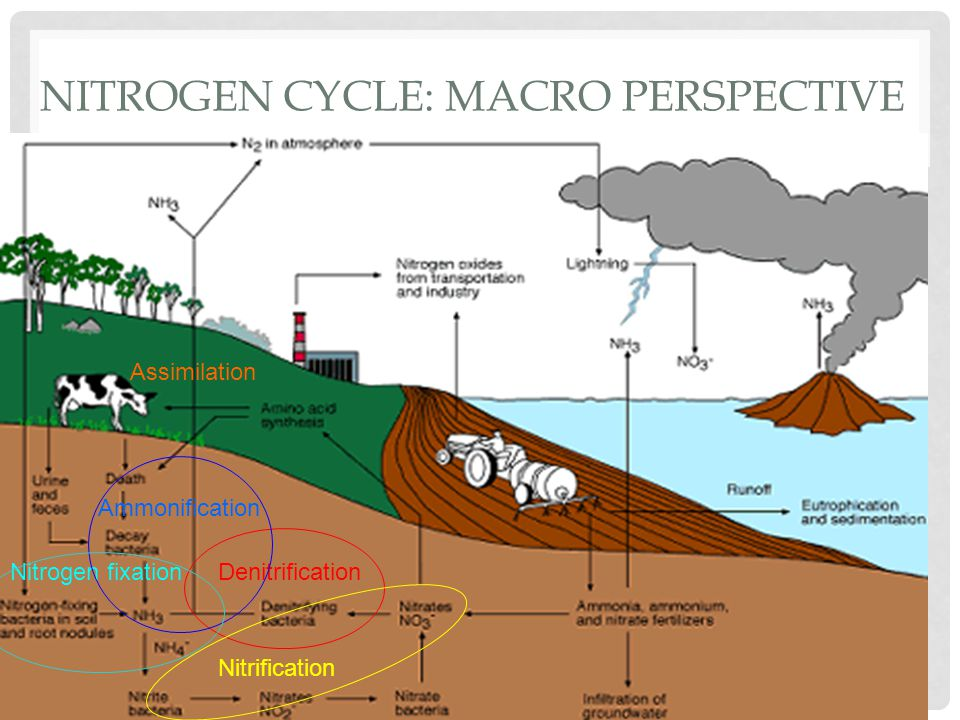 CARBON AND OXYGEN CYCLES Carbon and oxygen are critical for life on Earth, and their cycles are tied closely together.
