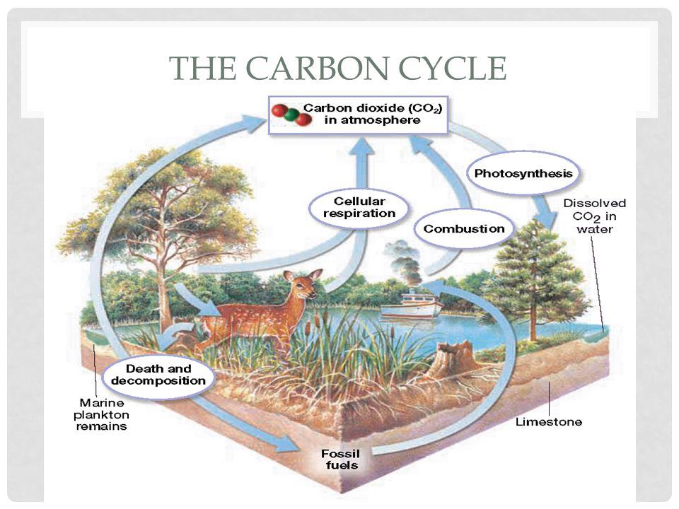 Animals then eat this vegetation.