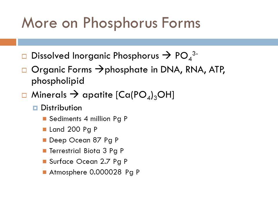 More on Phosphorus Forms  Dissolved Inorganic Phosphorus  PO 4 3-  Organic Forms  phosphate in DNA, RNA, ATP, phospholipid  Minerals  apatite [C