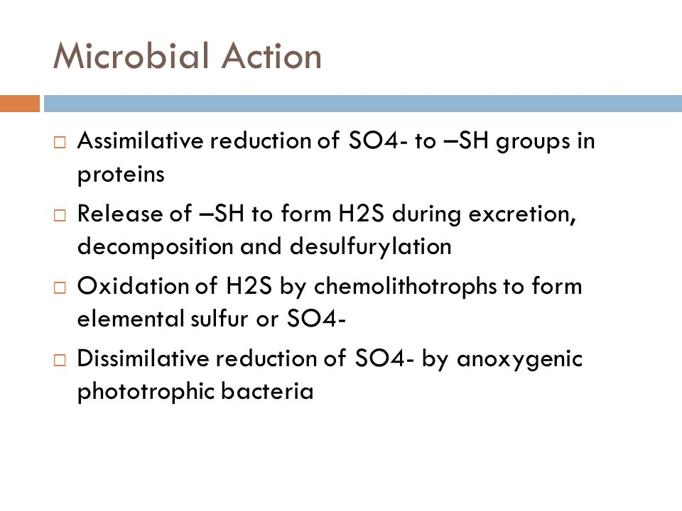 Microbial Action  Assimilative reduction of SO4- to –SH groups in proteins  Release of –SH to form H2S during excretion, decomposition and desulfury