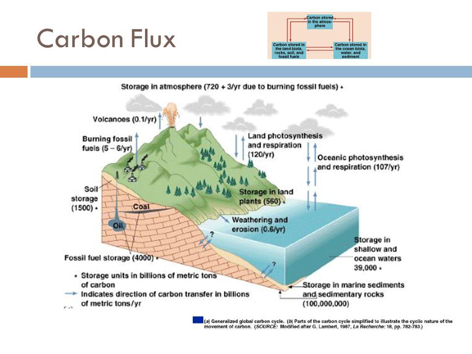 Sulfur Reservoirs  The crust  as gypsum (CaSO 4 ) and pyrite (FeS 2 )  Distribution  Lithosphere: 2 x 10 10 Tg S  Ocean: 1.3 x 10 9 Tg S  Ocean Sediments: 3 x 10 9 Tg S  Marine Biota: 30 Tg S  Soils and Land Biota: 3 x 10 5 Tg S  Lakes: 300 Tg S  Continental Atmosphere: 1.6 Tg S  Marine Atmosphere: 3.2 Tg S