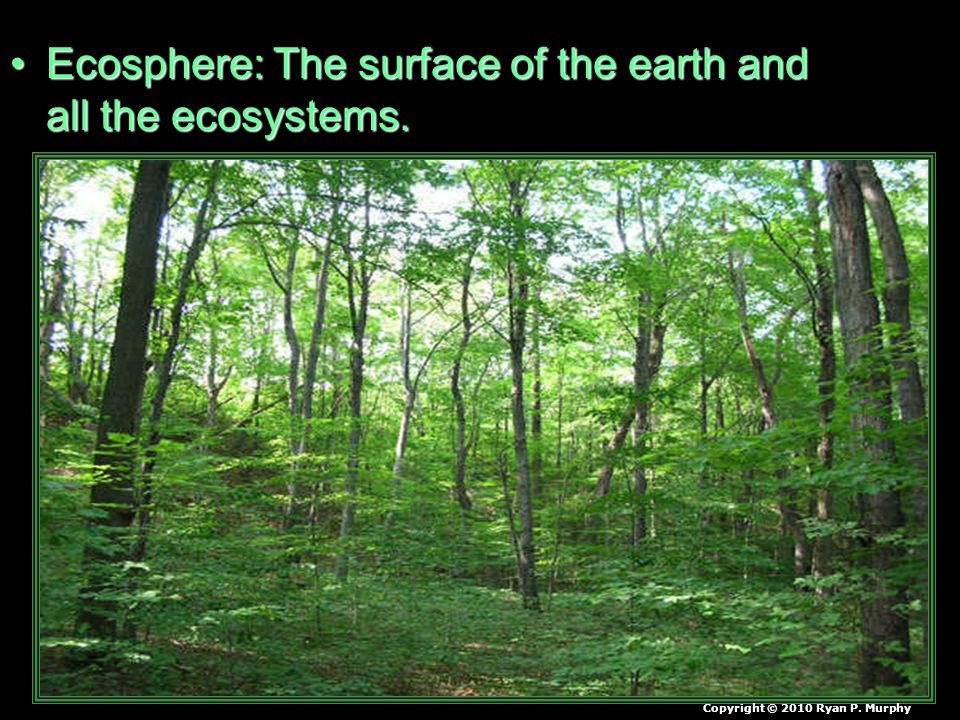 Ecosphere: The surface of the earth and all the ecosystems.Ecosphere: The surface of the earth and all the ecosystems. Copyright © 2010 Ryan P. Murphy