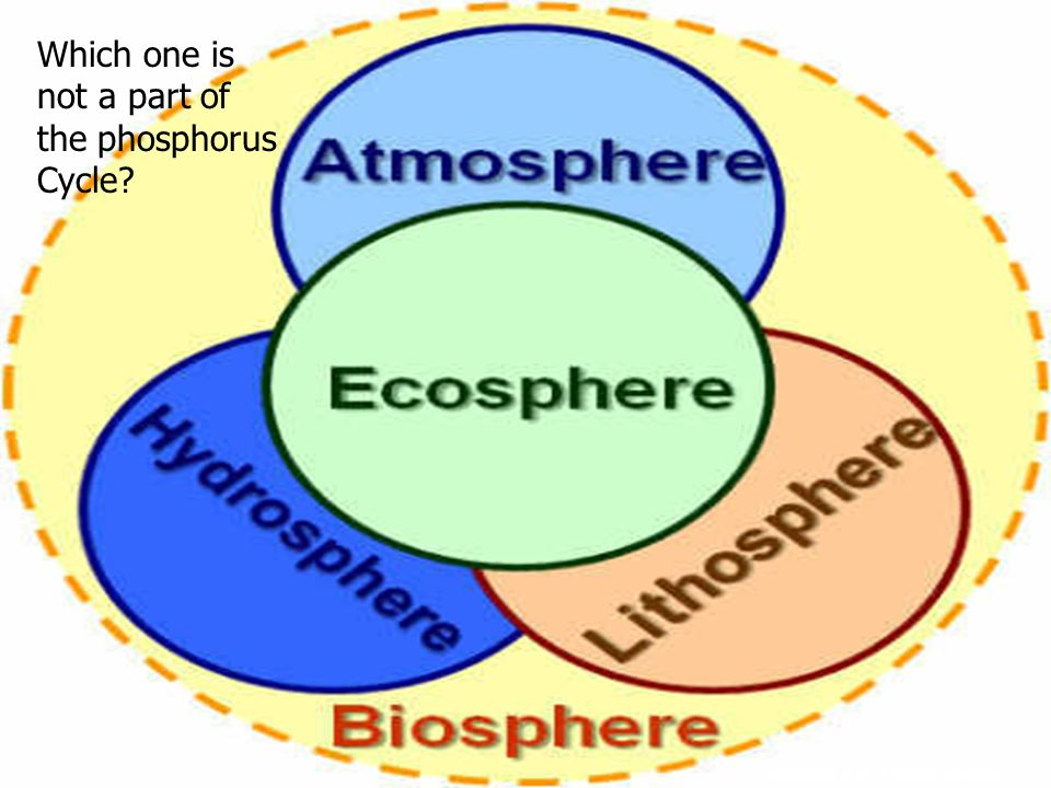 Which one is not a part of the phosphorus Cycle?
