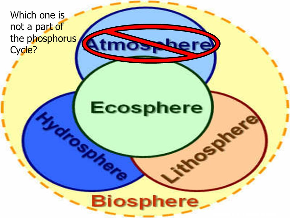 Copyright © 2010 Ryan P. Murphy Which one is not a part of the phosphorus Cycle?