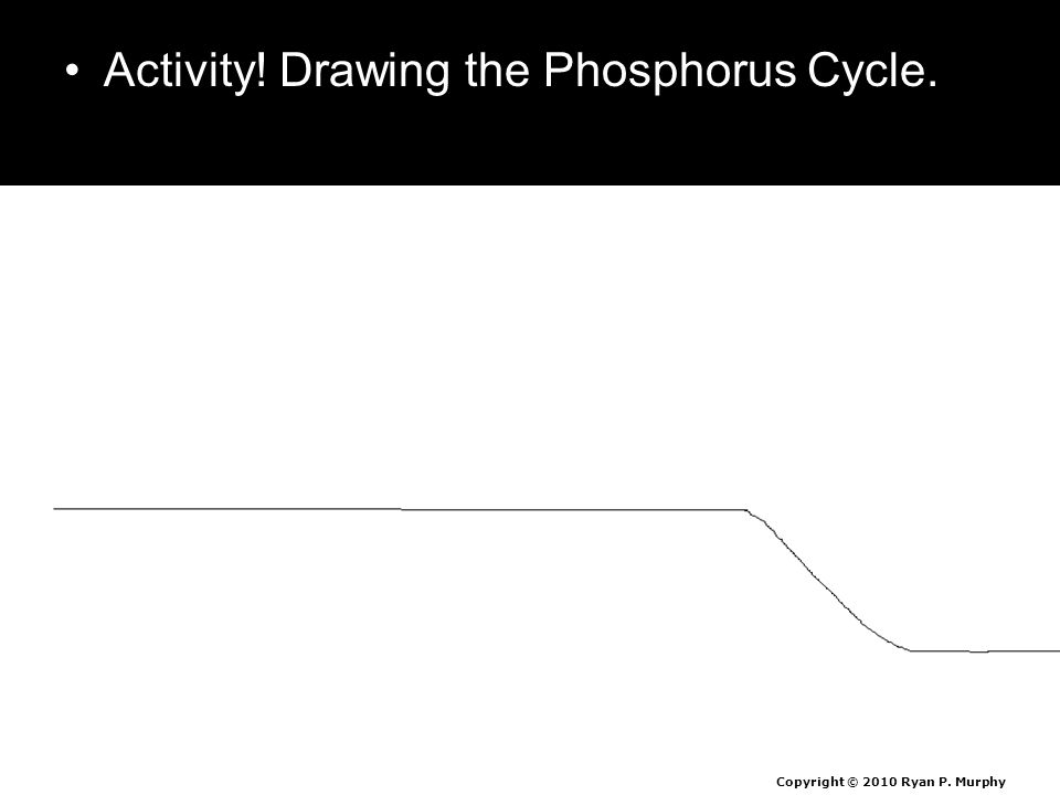 Activity! Drawing the Phosphorus Cycle. Copyright © 2010 Ryan P. Murphy
