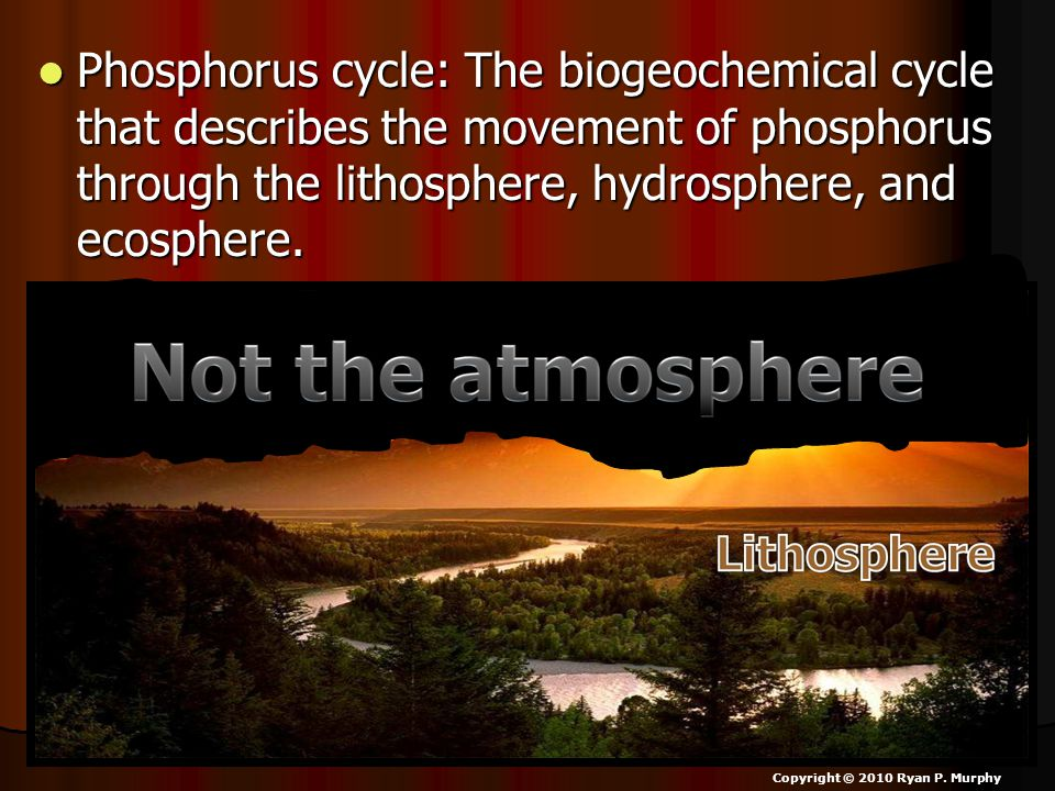 Phosphorus cycle: The biogeochemical cycle that describes the movement of phosphorus through the lithosphere, hydrosphere, and ecosphere. Phosphorus c