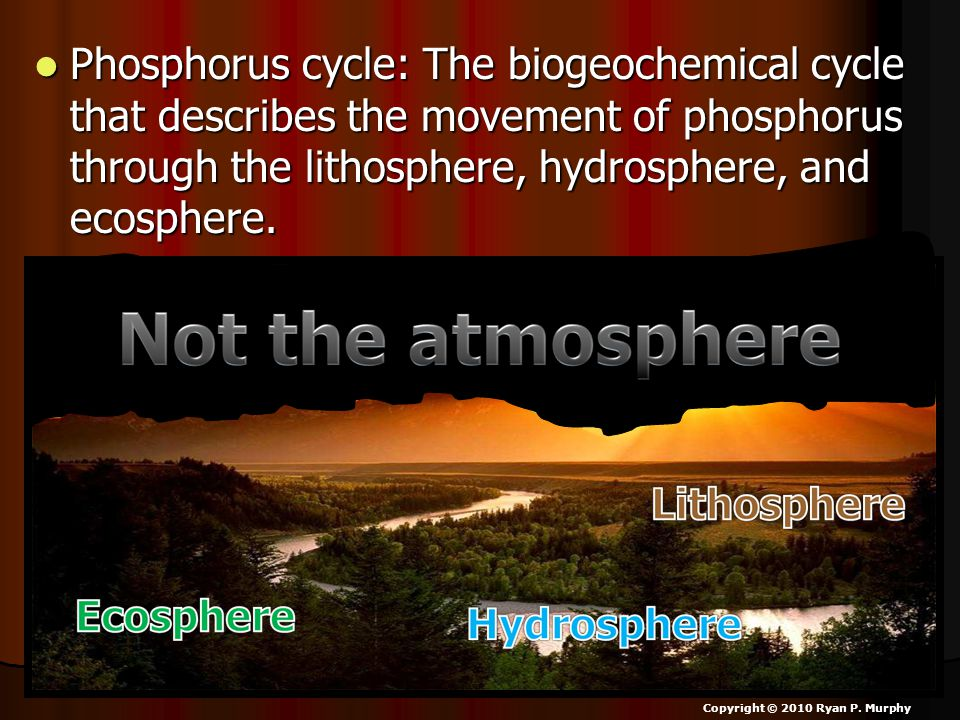 Phosphorus cycle: The biogeochemical cycle that describes the movement of phosphorus through the lithosphere, hydrosphere, and ecosphere.