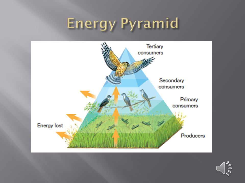  Each time energy is transferred, some of the energy is lost as energy in the form of heat.  Therefore, less energy is available to organisms at hig