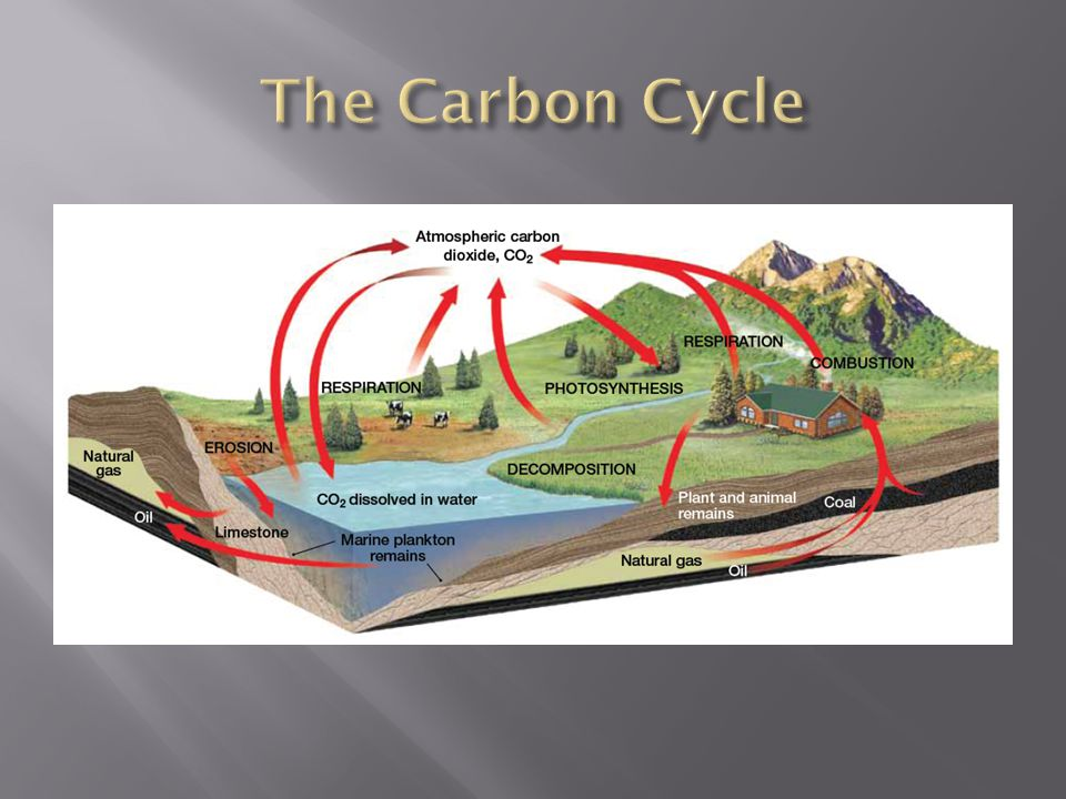  The carbon cycle is the movement of carbon from the nonliving environment into living things and back to the environment.  Carbon is the essential