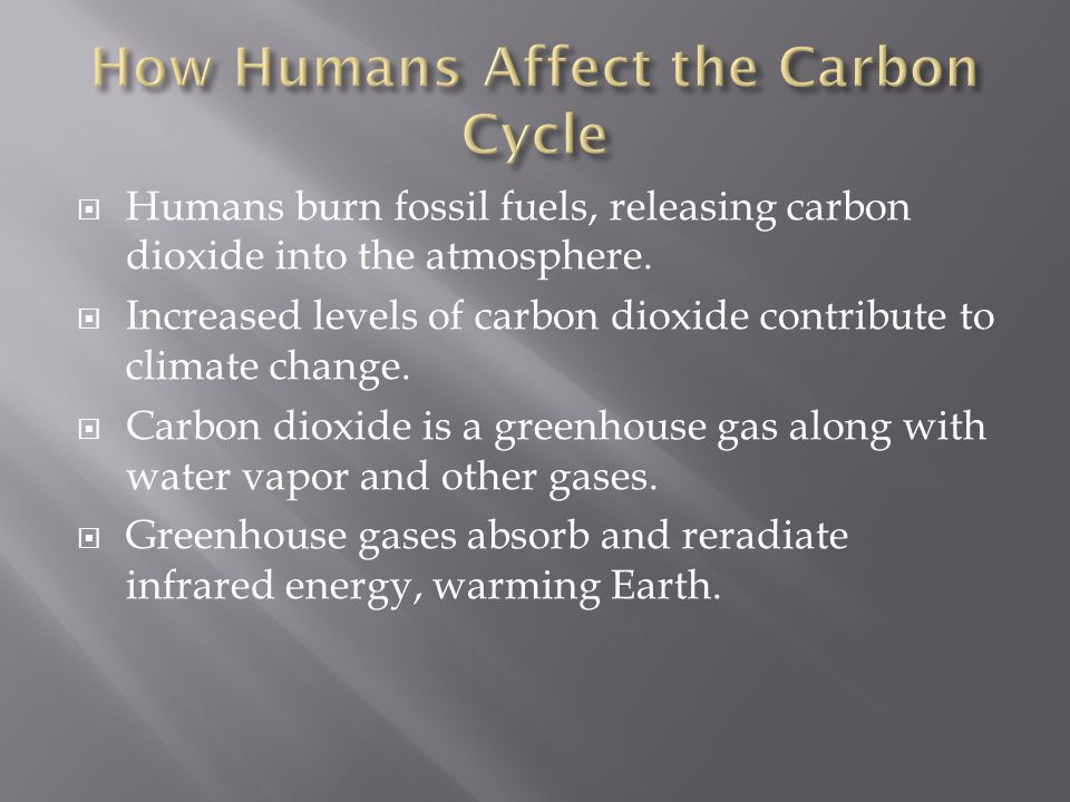  Carbon stored in the bodies of organisms as fat, oils, or other molecules, may be released into the soil or air when the organisms dies.  These mol