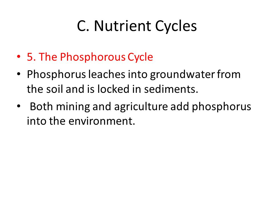 C. Nutrient Cycles 5. The Phosphorous Cycle Phosphorus leaches into groundwater from the soil and is locked in sediments. Both mining and agriculture
