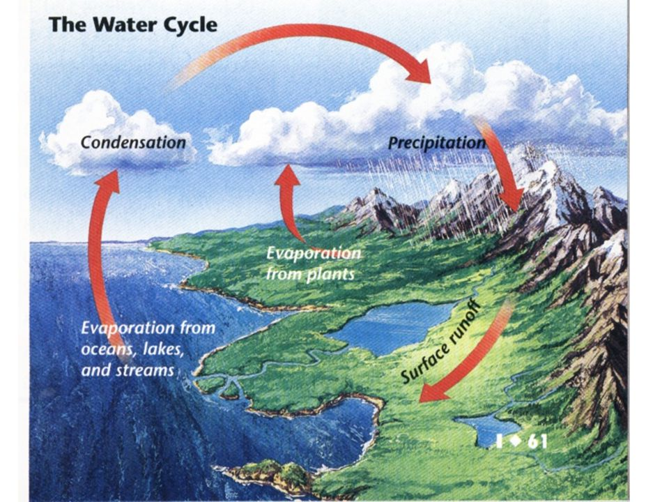 C.Nutrient Cycles 1. Nutrients- chemical substances an organism needs to stay alive.