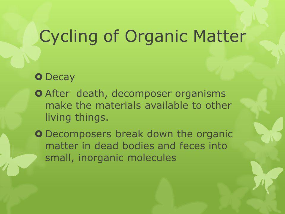 Cycling of Organic Matter  Food is organic matter.