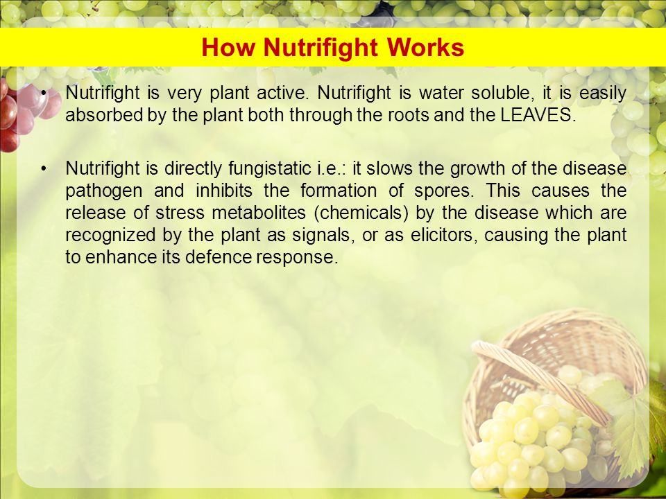 Nutrifight is very plant active. Nutrifight is water soluble, it is easily absorbed by the plant both through the roots and the LEAVES. Nutrifight is