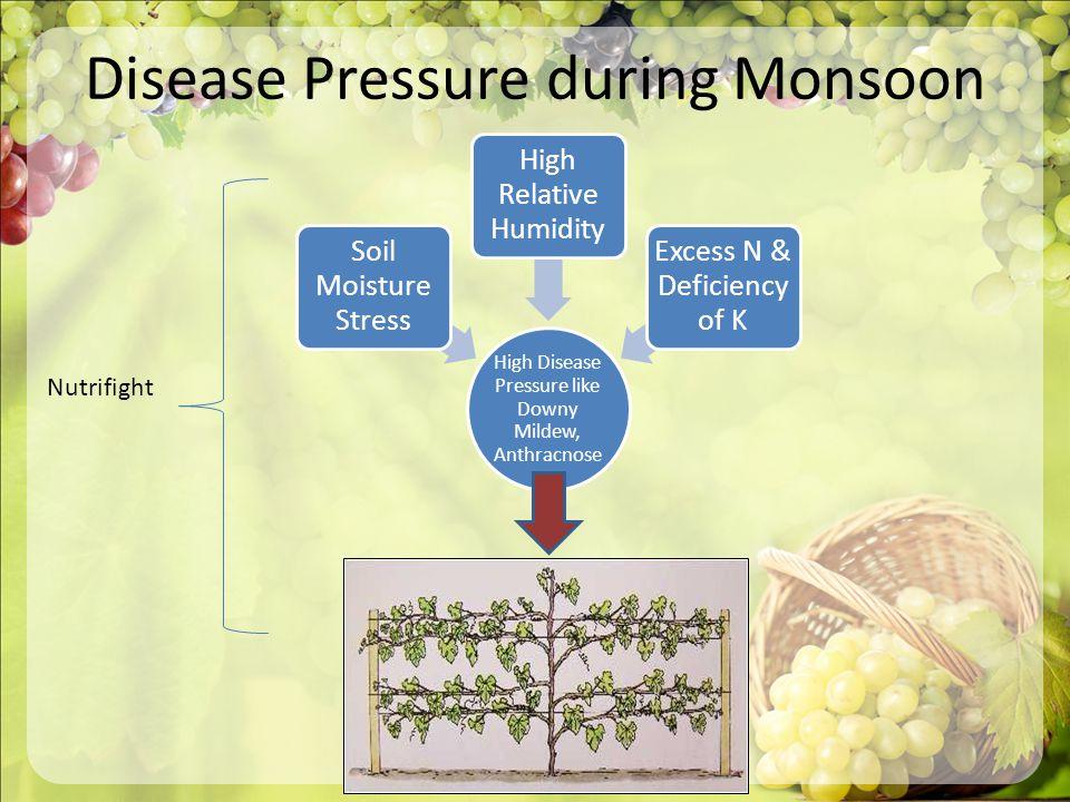Disease Pressure during Monsoon High Disease Pressure like Downy Mildew, Anthracnose Soil Moisture Stress High Relative Humidity Excess N & Deficiency