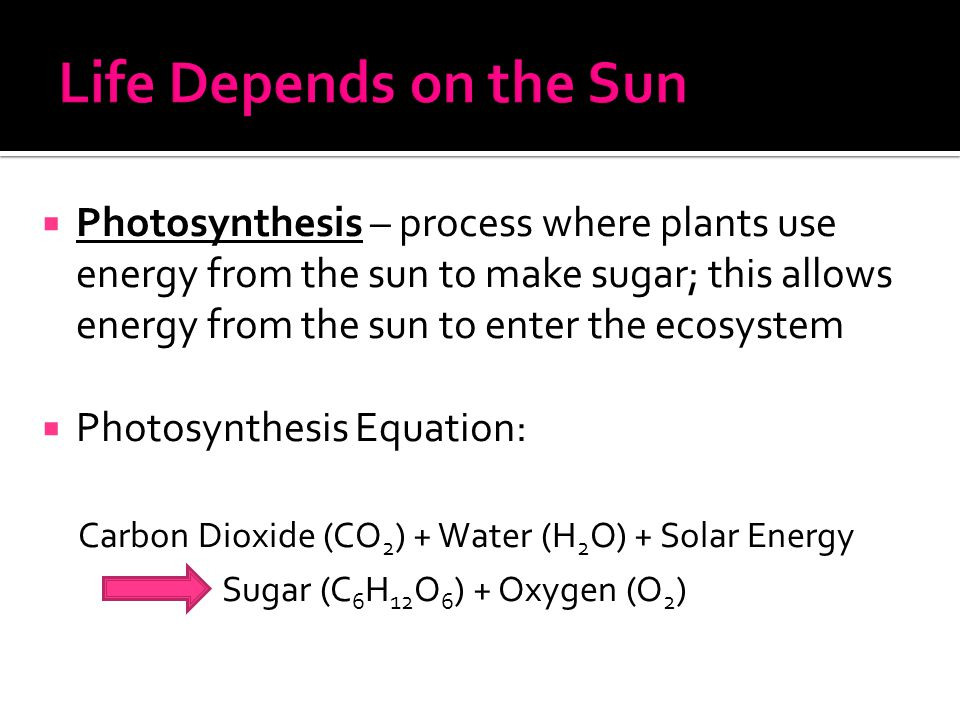  Photosynthesis – process where plants use energy from the sun to make sugar; this allows energy from the sun to enter the ecosystem  Photosynthesis
