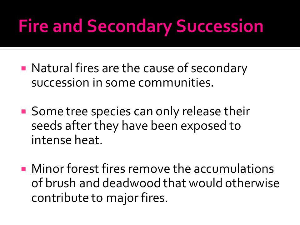  Natural fires are the cause of secondary succession in some communities.  Some tree species can only release their seeds after they have been expos