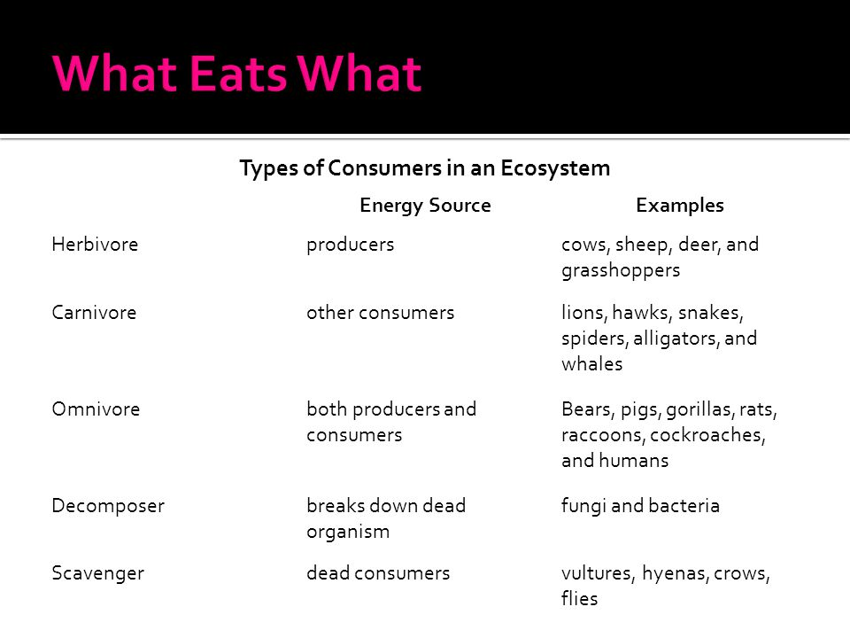 Types of Consumers in an Ecosystem Energy SourceExamples Herbivoreproducerscows, sheep, deer, and grasshoppers Carnivoreother consumerslions, hawks, s
