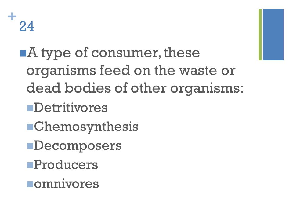 + 24 A type of consumer, these organisms feed on the waste or dead bodies of other organisms: Detritivores Chemosynthesis Decomposers Producers omnivo