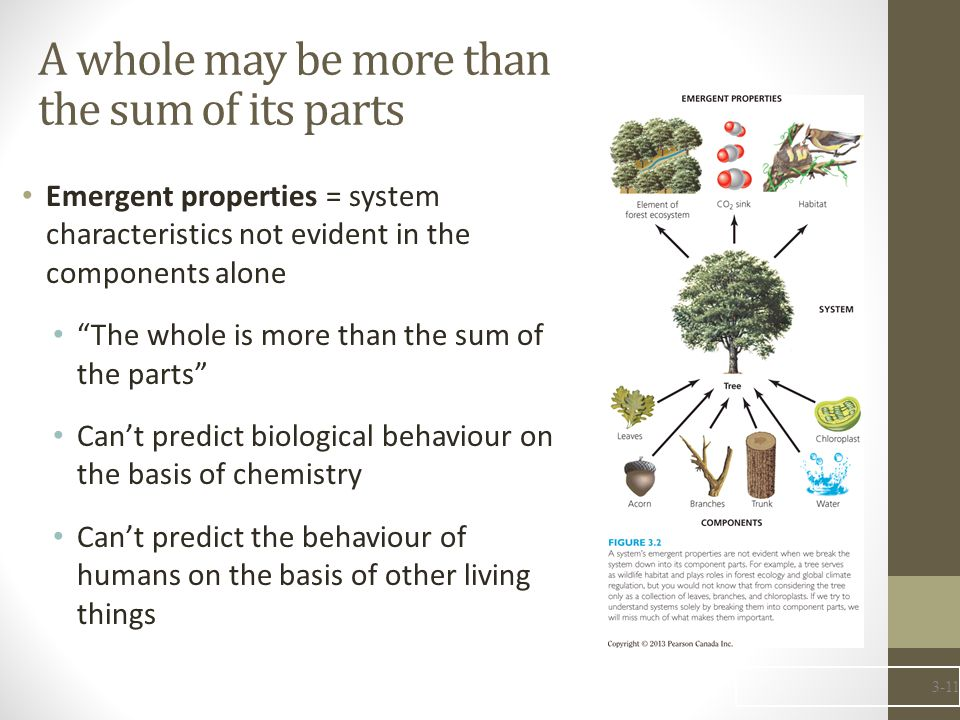 A whole may be more than the sum of its parts Emergent properties = system characteristics not evident in the components alone The whole is more than the sum of the parts Can't predict biological behaviour on the basis of chemistry Can't predict the behaviour of humans on the basis of other living things 3-11