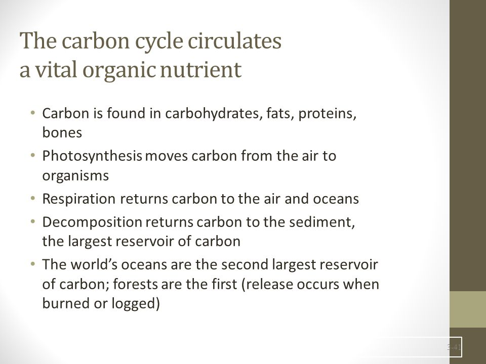 The carbon cycle circulates a vital organic nutrient Carbon is found in carbohydrates, fats, proteins, bones Photosynthesis moves carbon from the air