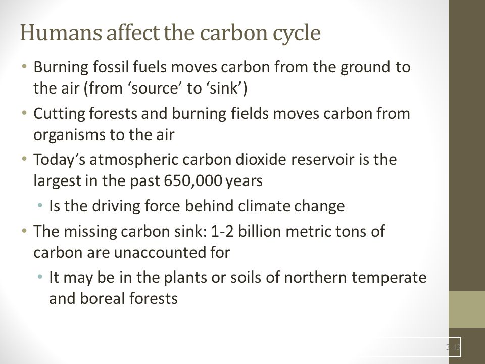 Humans affect the carbon cycle Burning fossil fuels moves carbon from the ground to the air (from 'source' to 'sink') Cutting forests and burning fiel