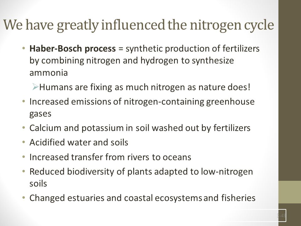 We have greatly influenced the nitrogen cycle Haber-Bosch process = synthetic production of fertilizers by combining nitrogen and hydrogen to synthesize ammonia  Humans are fixing as much nitrogen as nature does.