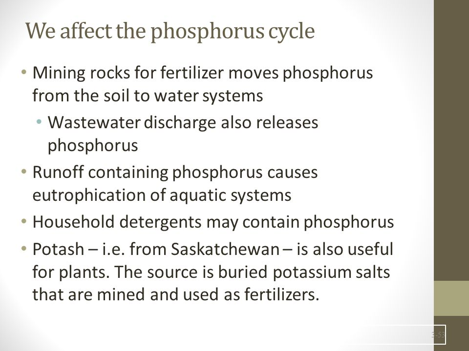 We affect the phosphorus cycle Mining rocks for fertilizer moves phosphorus from the soil to water systems Wastewater discharge also releases phosphorus Runoff containing phosphorus causes eutrophication of aquatic systems Household detergents may contain phosphorus Potash – i.e.