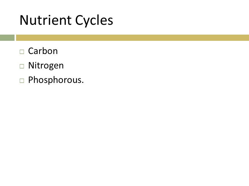 Nutrient Cycles  Carbon  Nitrogen  Phosphorous.