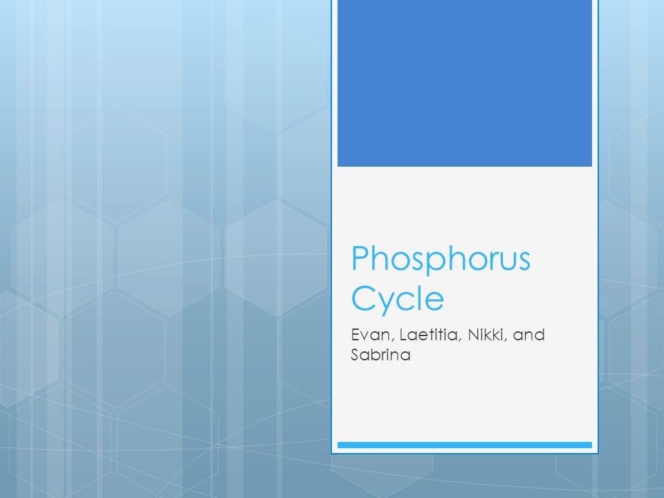 Phosphorus Cycle Evan, Laetitia, Nikki, and Sabrina