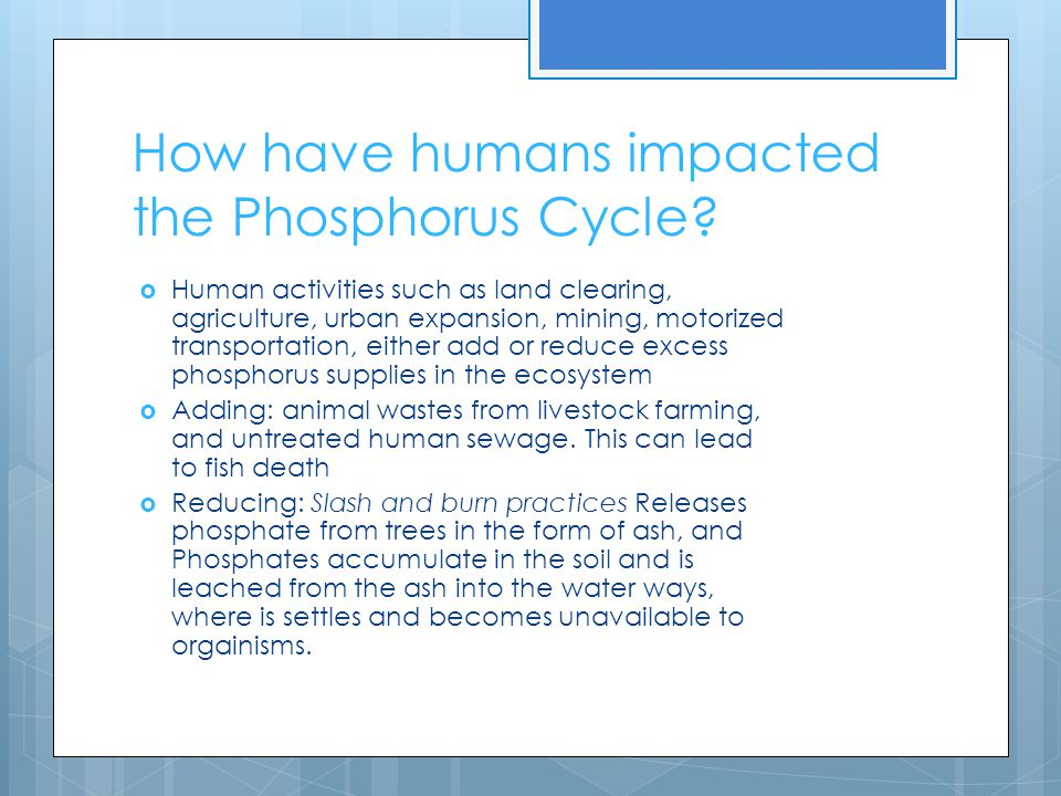How have humans impacted the Phosphorus Cycle.