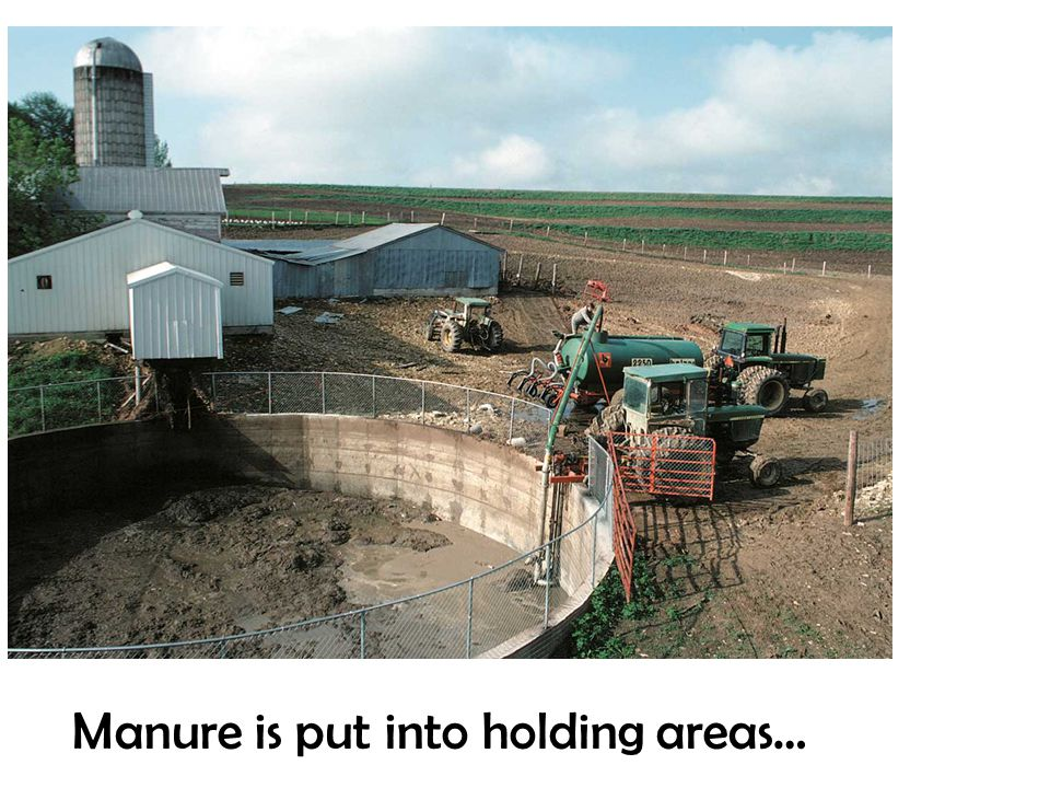 Manure is put into holding areas…